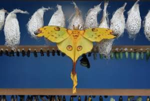 emerging butterflies